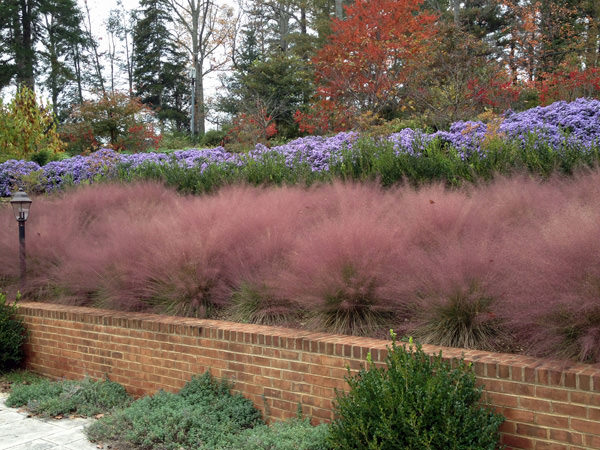 Native Landscape Design And Restoration In Central Virginia